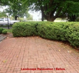 Landscape Renovation / Before